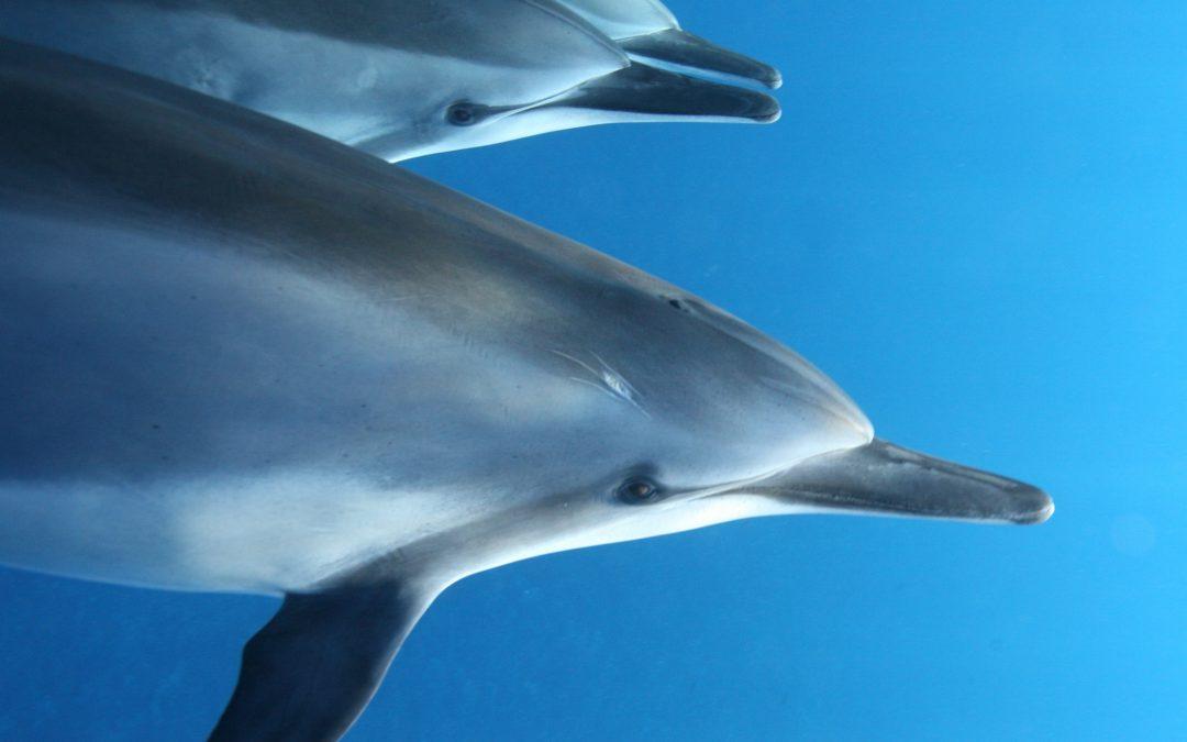 Dolphin Generosity